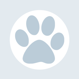 home-badges-paw